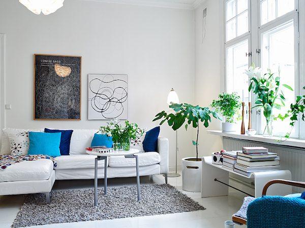 Kamerplanten in het interieur