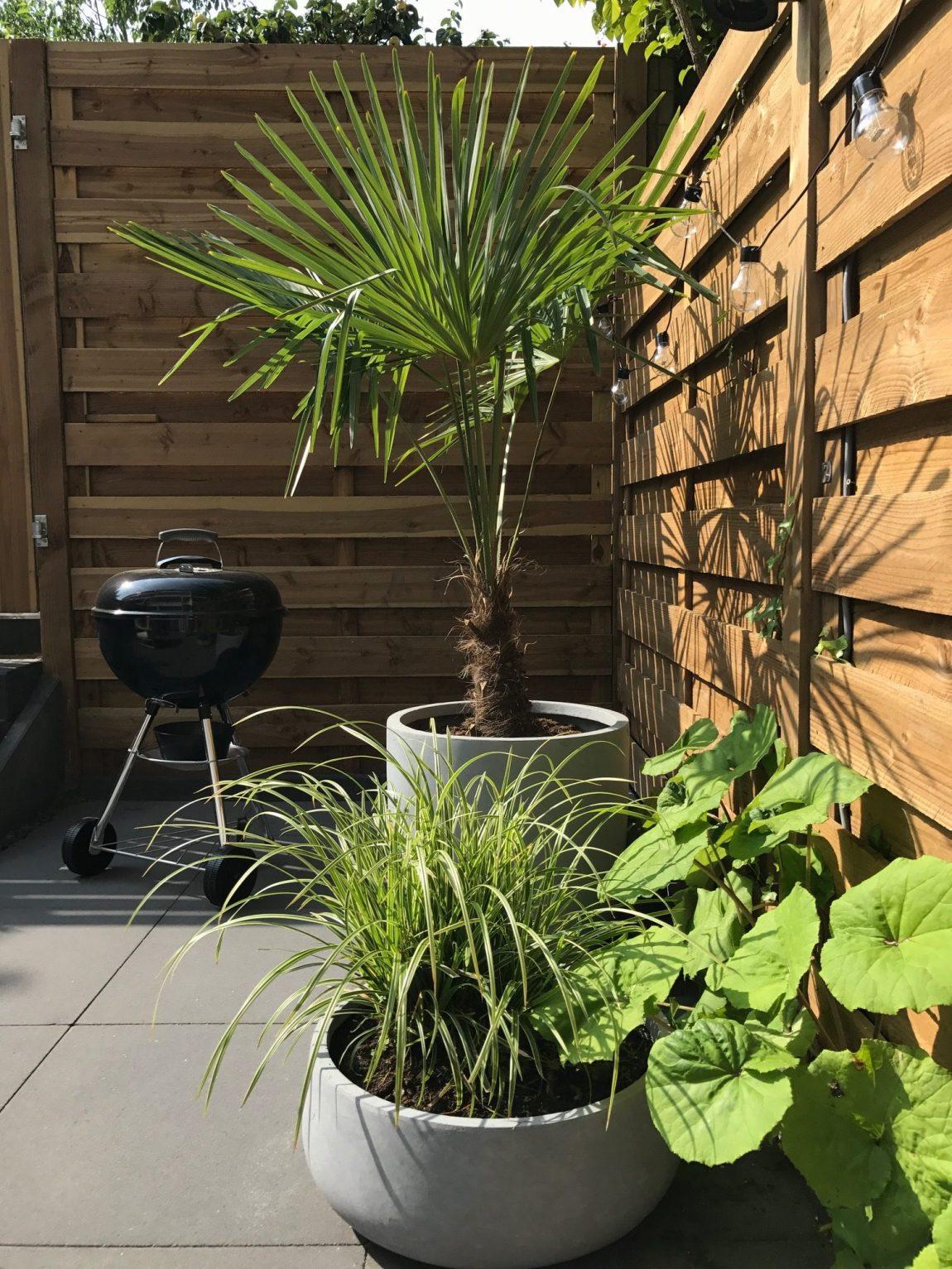 Bomen voor kleine tuin - Palmboom - Bron: Inrichting-huis.com
