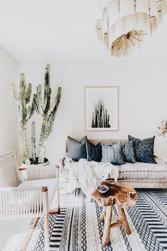 Cactus - Euphorbia ingens