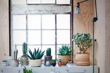 Cactussen zijn hot!