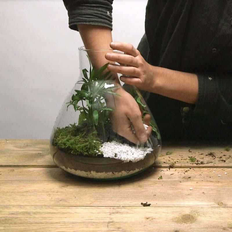 DIY plant in fles