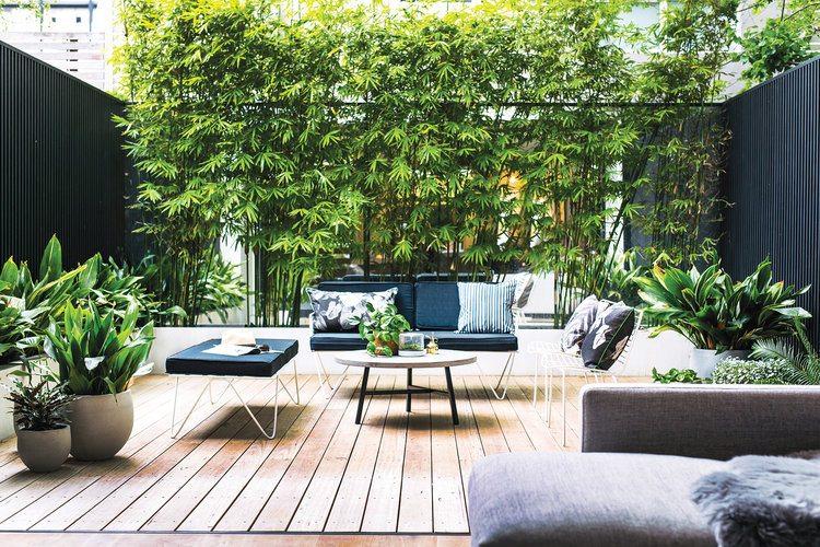 erfafscheidingen bamboe planten