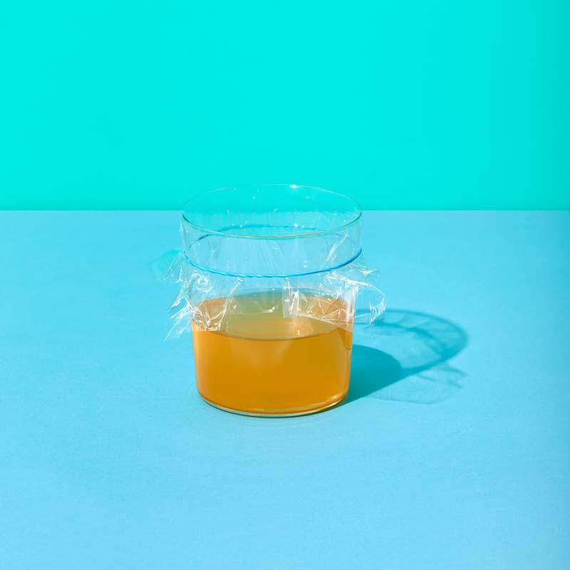 fruitvliegjes bestrijden val appelciderazijn plasticfolie