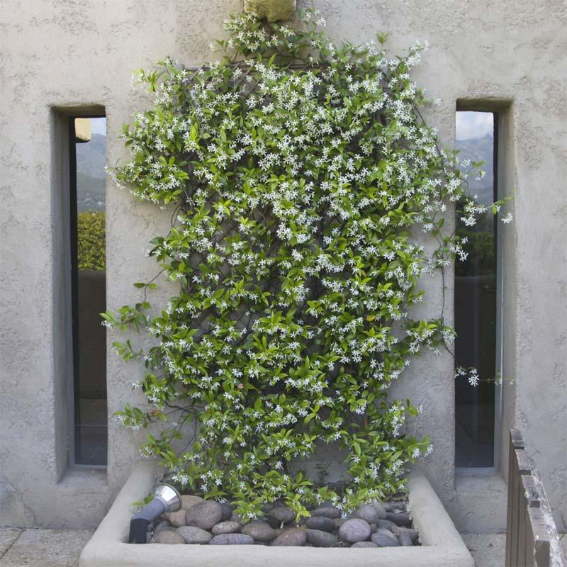 gezellige tuin inrichten geurende bloemen
