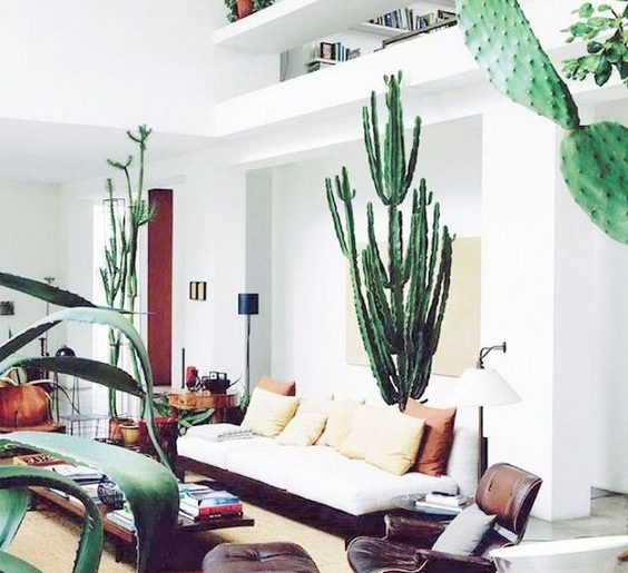 Grote plant in huis