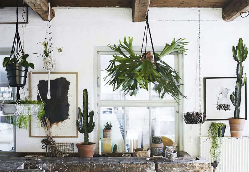 hangplanten hertzhoornvaren