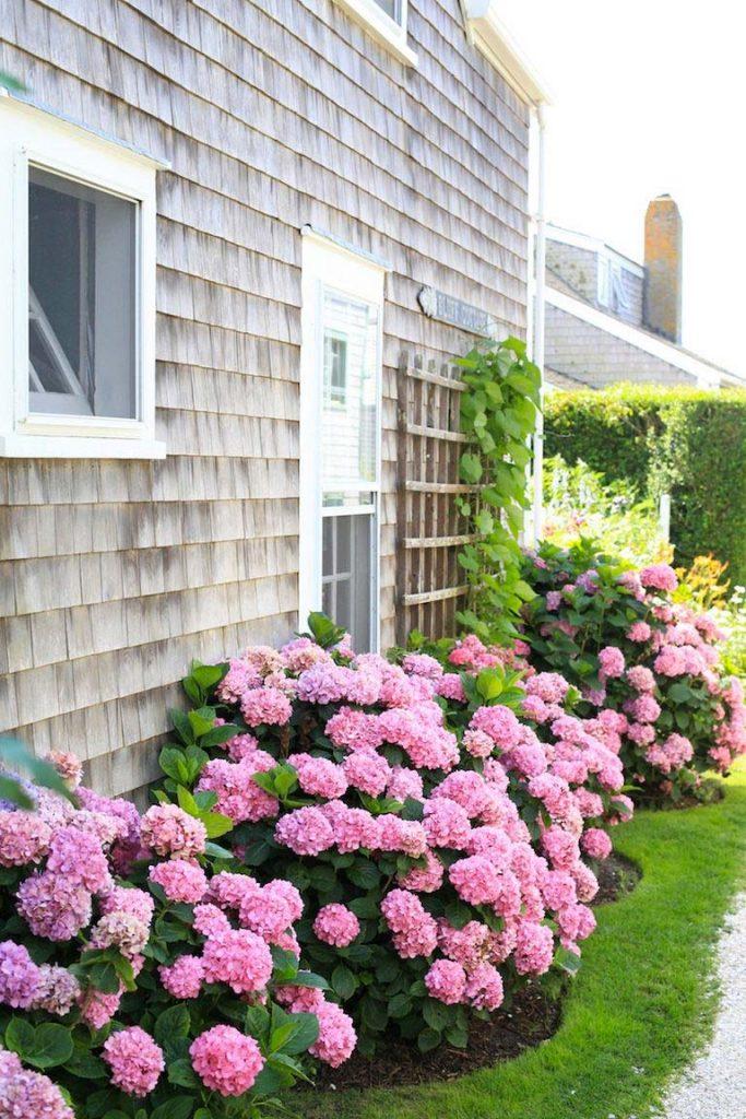hortensia snoeien roze