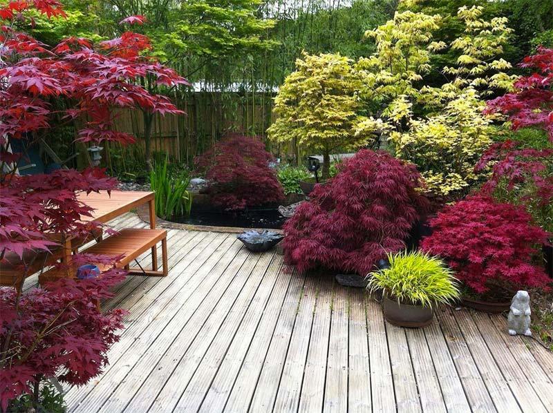 japanse tuin esdoorn