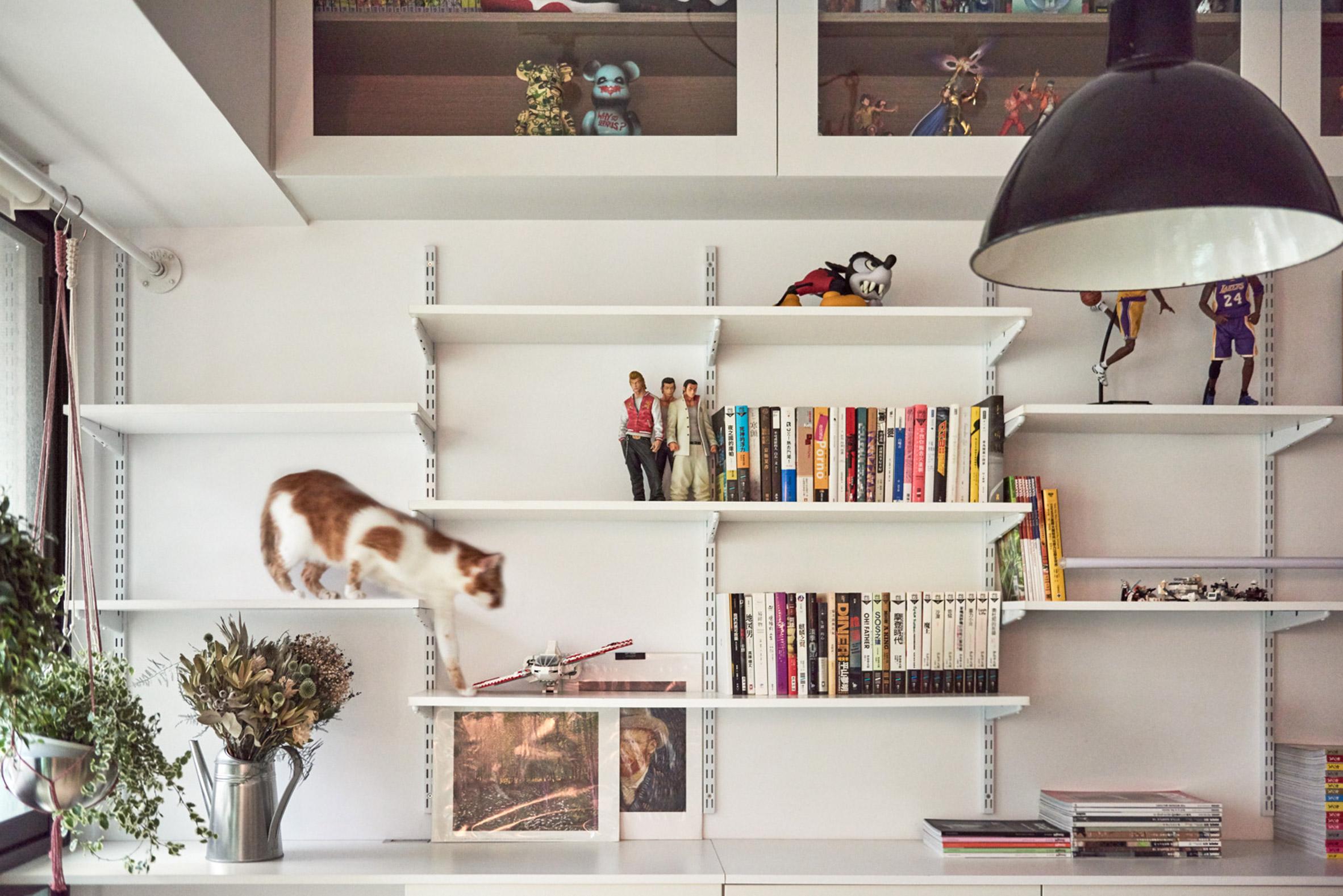 Met deze oplossingen maak je jouw kat én jezelf heel gelukkig! homease