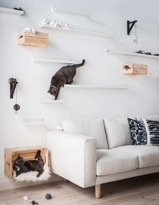 Kat in interieur