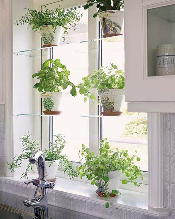 Kruiden moestuin op vensterbank