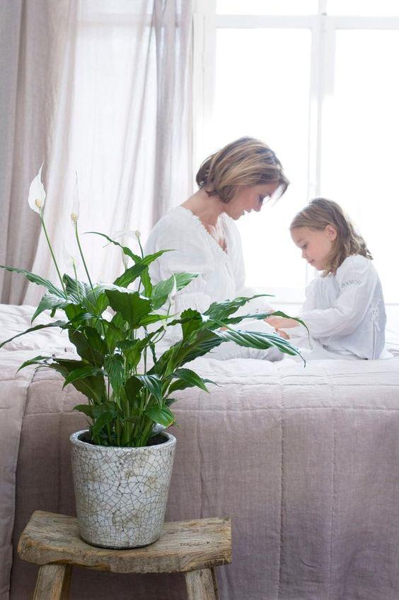 lepelplant-spathiphyllum