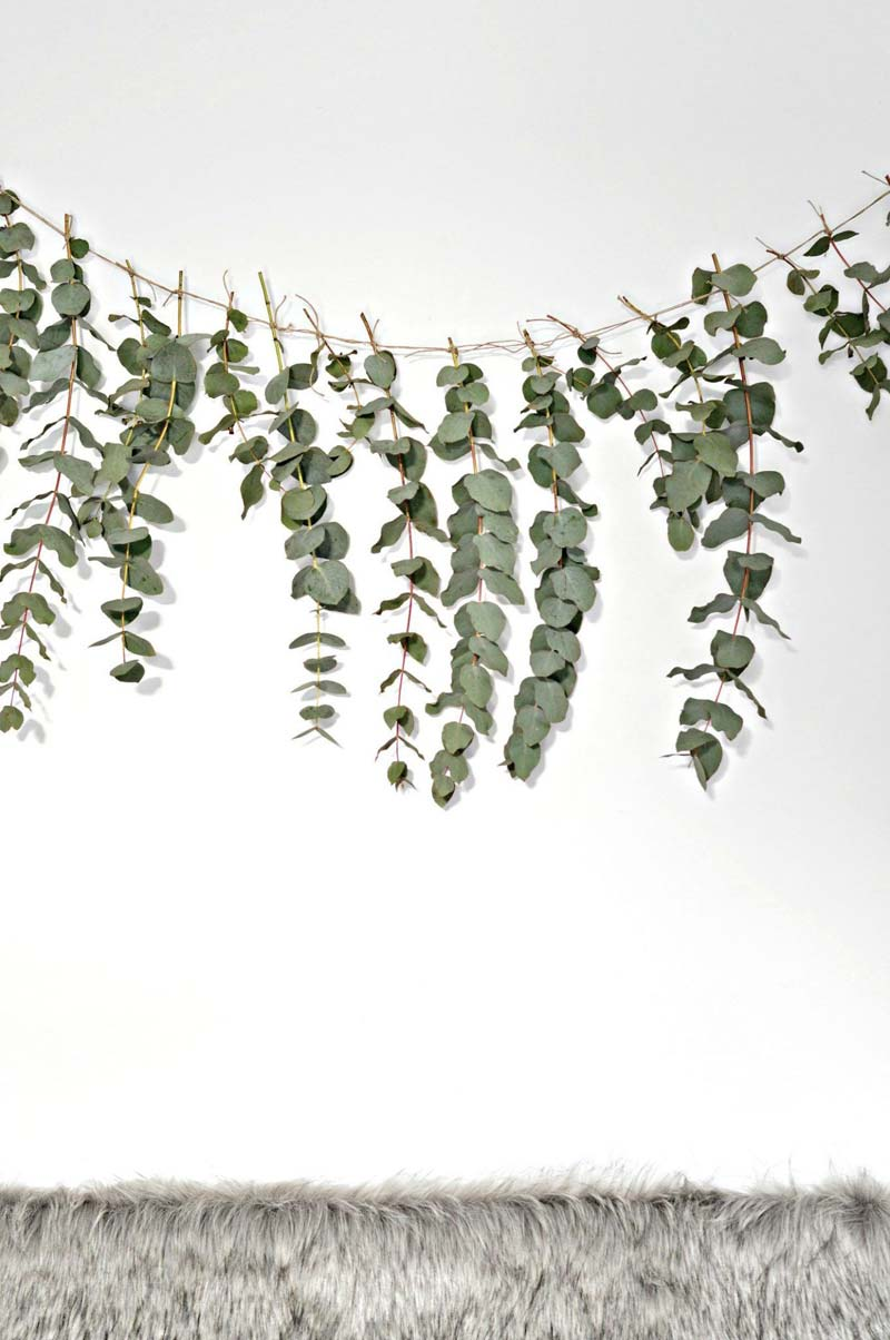 muis verjagen eucalyptus geur