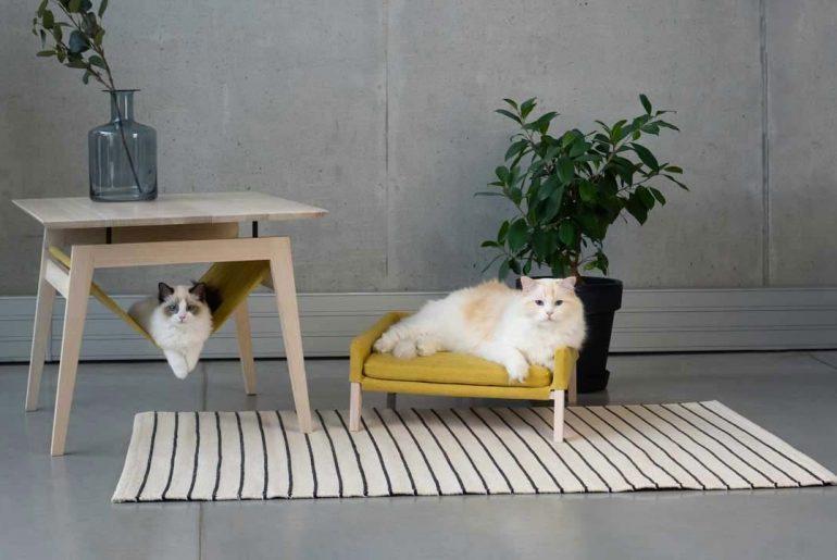 niet giftige planten voor katten en honden