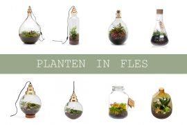 Plant in fles of glazen pot