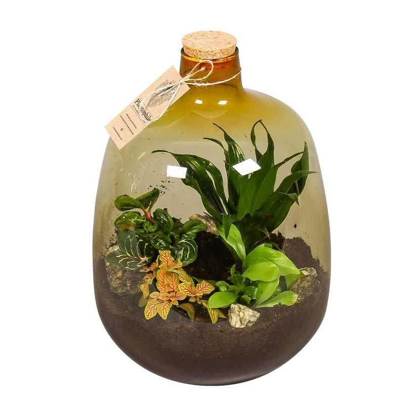 Plant in fles Plantophile