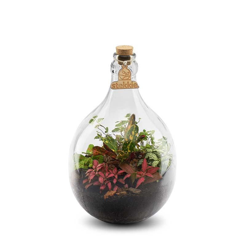 plant in fles stekkie