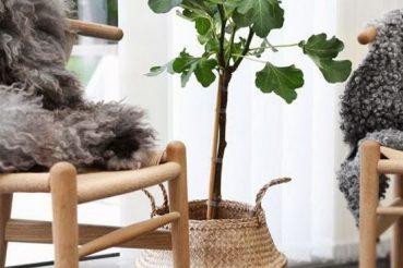 Planten in manden