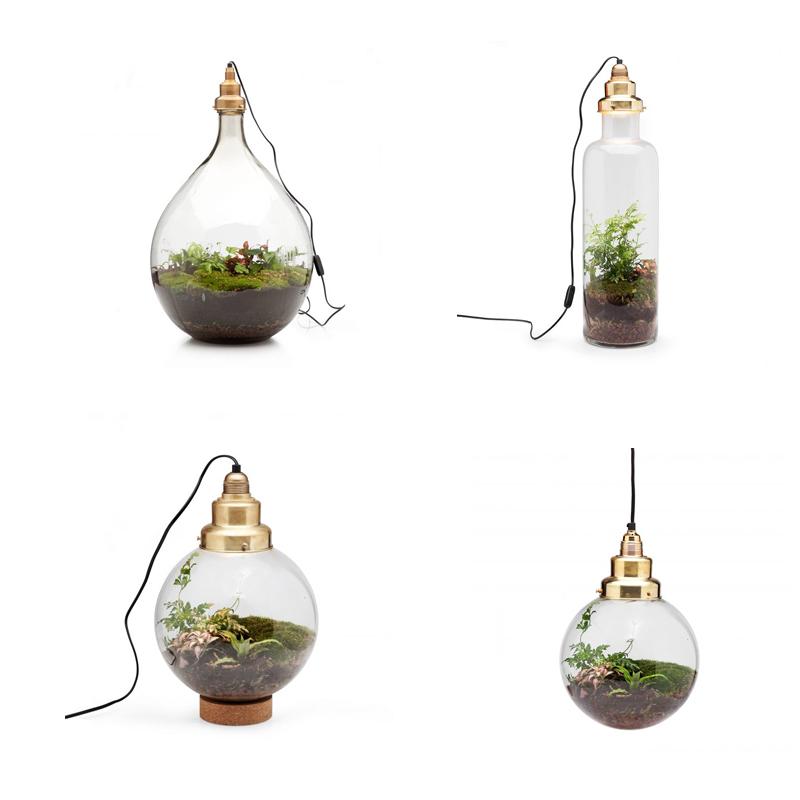Spruitje terrarium