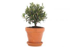 terracotta-plant-tuin