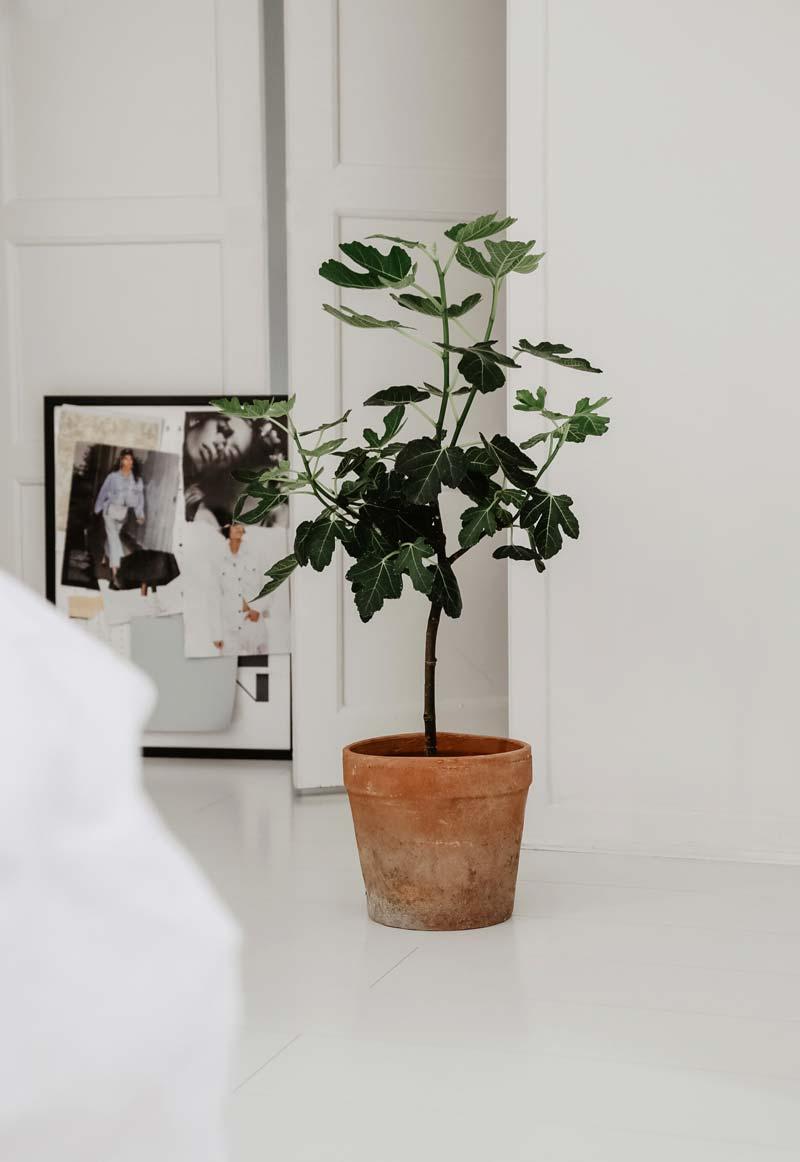 terracotta plantenpot