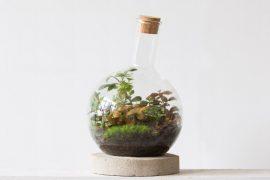 terrarium plantjes