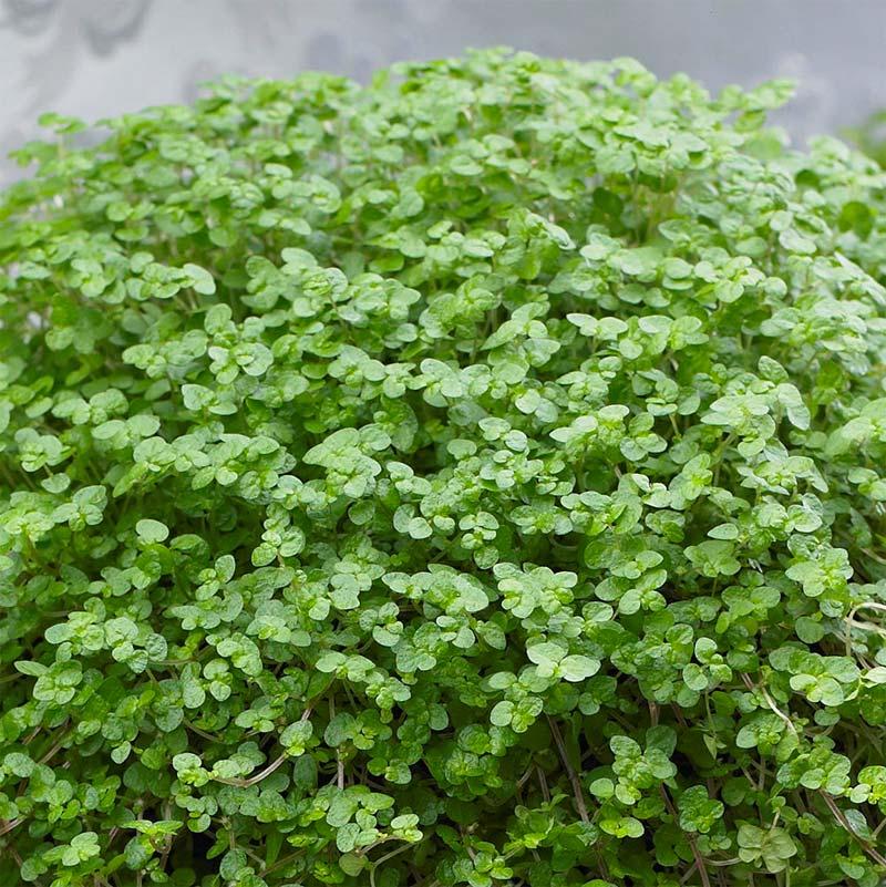 terrarium plantjes slaapkamergeluk