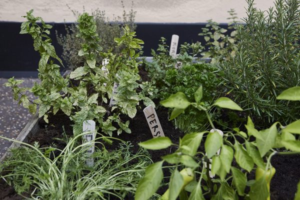Terras gedeelde binnentuin