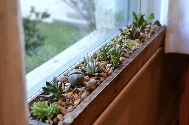 vetplanten vensterbank
