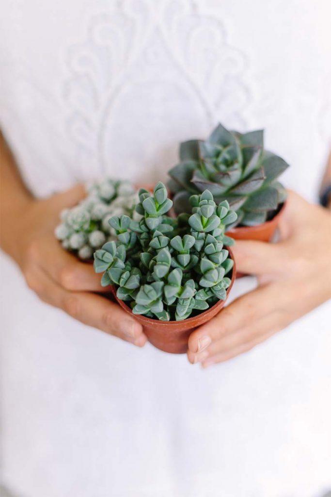 vetplanten verzorging