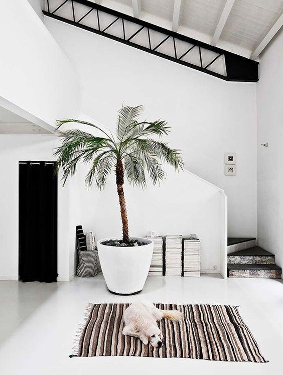 Zomers interieur planten